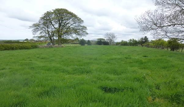 Grazing Paddock available to let at Ugthorpe